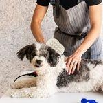 Cepillo-Para-Mascotas-Textura-Suave-Beige-10-x-14-cm-3-92